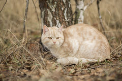 Autumn Cat Stock Photos