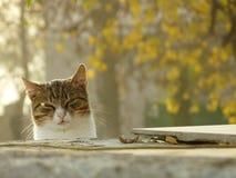Autumn cat. The сat on a sunny autumn day Stock Photos