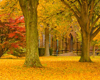 Autumn at the Cathedral royalty free stock images