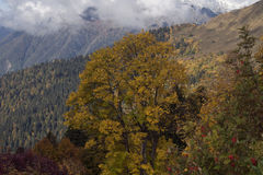Autumn in the Caucasus. Sochi Region. The surroundings of Krasnaya Polyana. Russia Stock Image