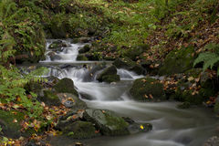 Autumn in the Caucasus. Western Caucasus, near Sochi. Autumn creek Royalty Free Stock Images