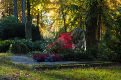 Autumn cemetery. Cemetery in autumn colors in Heidenheim, Germany Royalty Free Stock Image