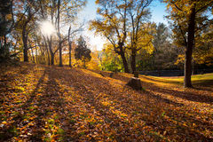 Autumn cemetery. Hillside cemetery with long shadows and autumn leaves Stock Photo
