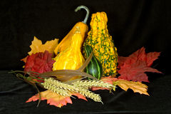 Autumn Centerpiece II. Centerpiece of autumn items on background of black micro velvet royalty free stock images