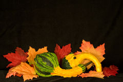 Autumn Centerpiece III Stock Photography