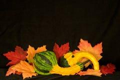 Autumn Centerpiece III. Centerpiece of autumn items on background of black micro velvet Stock Photography