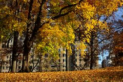 Autumn in Central Park, New York Royalty Free Stock Photography