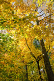 Autumn. In Central Park New York Stock Photography