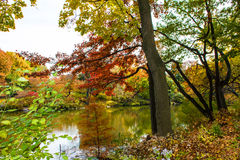 Autumn in the Central Park Royalty Free Stock Images