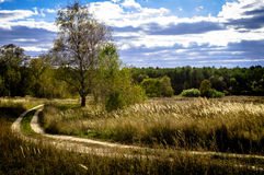 Autumn in Central Russia. Royalty Free Stock Photography