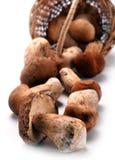 Autumn Cep Mushrooms dans un panier en osier Photo libre de droits