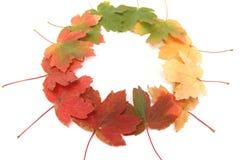 Autumn changes Royalty Free Stock Photo