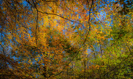 Autumn. Chaotic pattern of autumn leaves against a blue sky, forming an arc Royalty Free Stock Images