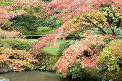 Autumn charm in Japanese garden. Beautiful autumn colors with pond and bench Stock Photo