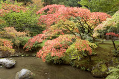Autumn charm in Japanese garden Royalty Free Stock Photo
