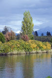 Autumn charm at Snohomish River Stock Images