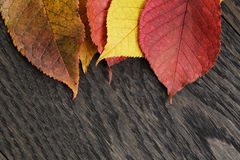 Autumn cherry leaves on old oak table Royalty Free Stock Photos