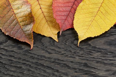 Autumn cherry leaves on old oak table Stock Photography