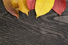 Autumn cherry leaves on old oak table Royalty Free Stock Photography