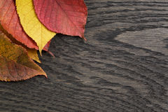 Autumn cherry leaves on old oak table Stock Images