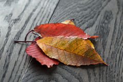 Autumn cherry leaves on old oak table Stock Photos