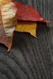 Autumn cherry leaves on old oak table Stock Photos