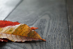 Autumn cherry leaves on old oak table Royalty Free Stock Images