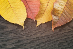 Autumn cherry leaves on wood background Royalty Free Stock Photos