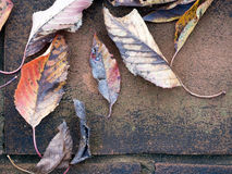 Autumn cherry tree leaves on rustic paved floor Stock Photography