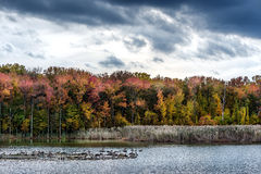 Autumn on a Chesapeake Bay Lake Royalty Free Stock Photography