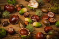Autumn chestnut and acorn on table Stock Photography