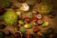 Autumn chestnut and acorn on table Royalty Free Stock Photography
