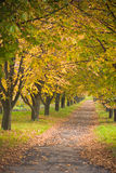Autumn chestnut alley. With foliage Royalty Free Stock Image