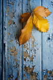 Autumn chestnut leaves against peeling paint Royalty Free Stock Image