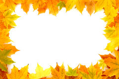 Autumn Chestnut Leaves Frame Images stock