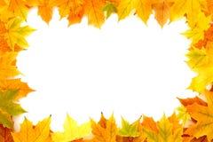 Autumn Chestnut Leaves Frame Stock Images