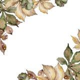 Autumn chestnut leaves. Leaf plant botanical garden floral foliage. Frame border ornament square. Aquarelle leaf for background, texture, wrapper pattern stock illustration
