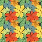 Autumn chestnut's  leaves Royalty Free Stock Photos