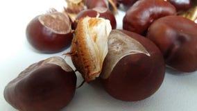 Autumn chestnut spike plant common fruit medicine season seed shell. Spiny white Royalty Free Stock Photos