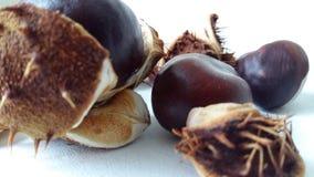 Autumn chestnut spike plant common. Fruit medicine season seed shell spiny white Royalty Free Stock Photos