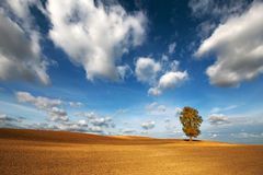 Autumn chestnut tree in a plowed field Stock Image