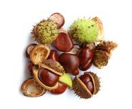 Autumn chestnuts Stock Image