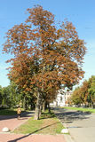 Autumn chestnuts along the way. Stock Photography
