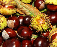 Autumn chestnuts background Royalty Free Stock Photography