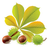 Autumn chestnuts Stock Photo