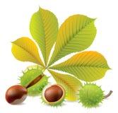Autumn chestnuts Stock Photo