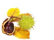 Autumn chestnuts corner Royalty Free Stock Photo
