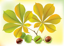 Autumn chestnuts and leaves Royalty Free Stock Photo