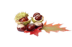 Autumn chestnuts and leaves on a white. Royalty Free Stock Photography