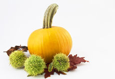 Autumn Chestnuts and Pumpkin Royalty Free Stock Photo